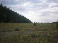 Ладушкины поля