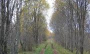 дорога в поселение грунтовка