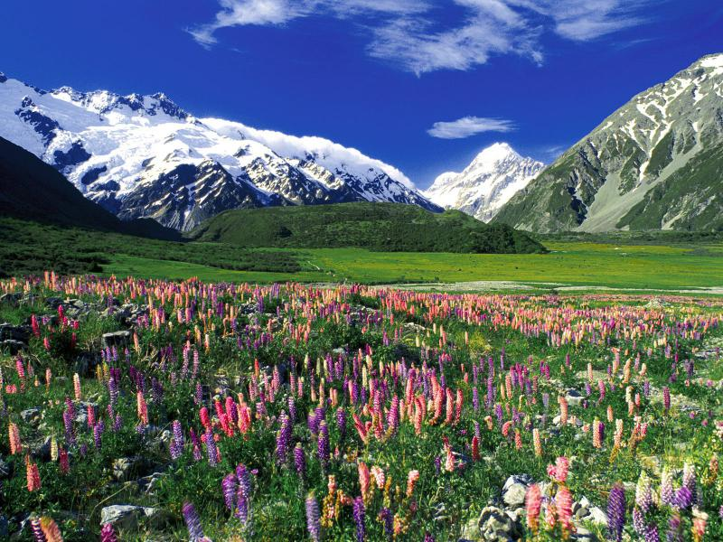 spring_meadow_mount_cook_new_zealand.jpg